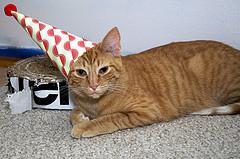 cat in hat photo