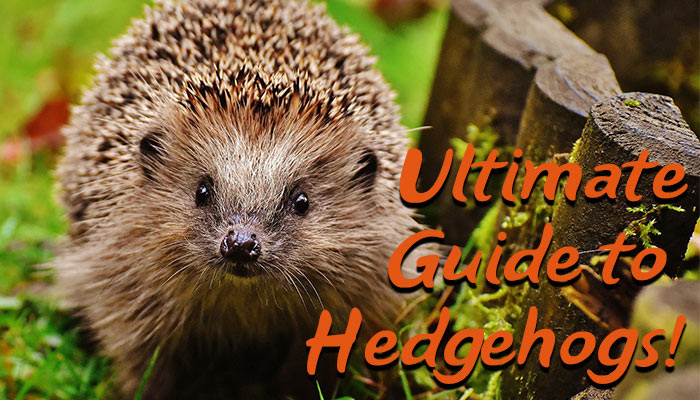 Clive Harris - DIY Garden - guide-to-hedgehogs-header